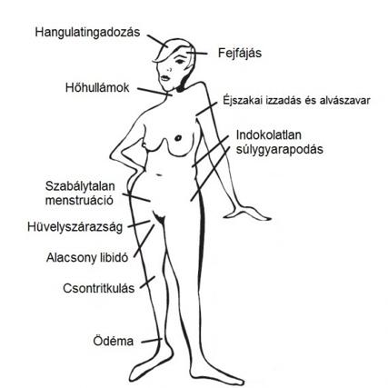 hormonegyensuly-rajz1